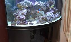 Great 90 gallon corner oceanic tank for sale. Between 100-150 pounds of live rock. 2 tunze jets (1 year old) 2 korallia jets vortex protein skimmer (1 year old) 2 led actinic strips oceanic sump 4 T5 lights Python hose 3/4 pail of H2ocean salt Dory-regal