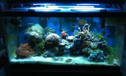 """90 Gallon Reef Setup. Hardware: 90 Gallon tank (Some scratches on front near bottom, where sand is) 48"""" Current USA Sunpod 2 x 150W HQI fixtures. Currently with Pheonix 14000K bulks (about 6 mos old)."""