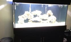 I have a 90 gallon fish tank set up for saltwater but can easily be switched to fresh water. A black canopy and stand very strong good quality.Comes with 75 pounds of live rock, 80 kg of live sand, a diamond Goby sand sifter, a pulsating Xenia, branching