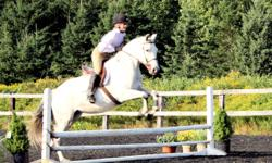 Wrangler is a 9 year old arab/quarter horse cross mare.  15 hh Very easy keeper.  Quiet and calm. Excellent on road and trails. She is going well english and loves to jump. Would make a great event horse but would excel at any discipline She was in the