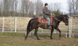 9 year old qh type mare for sale. She is UTD on farrier, worming and vaccines. Currently she lives outside 24/7 with a shelter. Doesnt mind being in a stall, but prefers to have company in the barn. Selling because we have too many horses and not enough