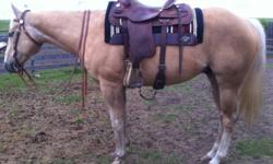 Kelso is a handsome 15.2hh, 9 year old, unregistered Quarter horse gelding. He is well broke to ride western. Great on the trails! He requires an intermediate rider. Loads, and stands for the farrier like a pro. Selling because I am moving to BC at the