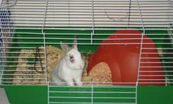 I have a very cute little bunny named Shadow, he is 4 months old, done growing, he will stay small. I do love him very much but i don't have the time to give him all the love he needs anymore, i have another bunny and a 7 week old that take up almost all