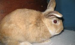 I have several adorable rescue bunnies that have been waiting for adoption 2-5 months. Please adopt one of them rather than buying from a store and supporting bunny mills. If you scroll through the pictures on the left, you will see some of our rescue