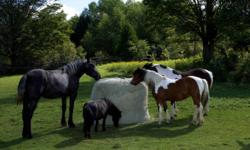 SLOW BALE BUDDY We are pleased to introduce the SLOW BALE BUDDY The perfect solution for feeding horses round and square bales of all sizes. Made of soft, strong knotless nylon netting with 1 1/2 inch openings, and fastened with a special safety fastener,
