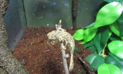 Chaotic Xotics   Just in time for the Christmas season all Geckos are 20% off, this is the perfect time to add a new pet to your family. We have several different types of Gecko to suite your home and lifestyle whether this is your first reptile or your
