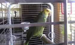 Polly IS Very tame and talks we must sell ASAP  Large cage paid 400 just for cage    Never sexed   Please dont aske for a better price a bird like this and the cage is about $2000
