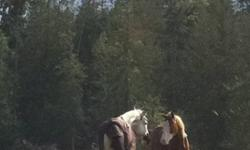 Super super quiet sound jumping gelding. Awesome on trails very sweet. This ad was posted with the Kijiji Classifieds app.