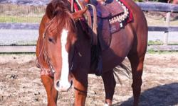 Beautiful 3 year old 15.2hh mare. Super duper quiet and just an absolute sweetheart. Extremely well bred. She is well started loads baths clips hauls. Own daughter of zippos heaven sent This ad was posted with the Kijiji Classifieds app.