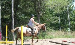 """14hh appy cross. Name : Fancy. Trained for gaming (barrels,poles etc) + English flat, and can also somewhat jump (18"""" - 2ft) so far. Can be a good hunter jumper if trained, Good in trails, will go threw almost anything. may be able to negotiate with the"""