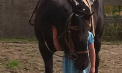 15.3hh reg Aqha mare. Sound goes English and western jumps started on barrels excellent on the trails. This ad was posted with the Kijiji Classifieds app.