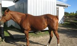 2001 AQHA mare. Well trained with reining basics, soft and responsive to cues, easy to handle, lot's of time on cattle. Would make an outstanding cattle penner, heel horse or run barrels on. Has worked as turn back horse and attended working cow horse