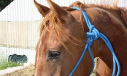 Well bred 2010 Registered AQHA filly. Born April 16. She picks up feet, leads, ties. Up to date on feet&worming. She will make a great all around horse when older. Will mature to be 15.1 -15.2. Would make a great project.NEED GONE ASAP! If ad is still up
