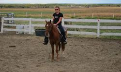 """Peppys Tom Cat Olena """"Tommy"""" has a great disposition & a good mind. He has been started under saddle and has a good mind. He would be great for pleasure, trail riding or working cow horse. His blood lines go back to Old Tom Cat top and bottom as well as"""