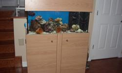 aquarium 45 gallon avec decante skimmer pompe de remonter pompe de brassage coralia lumiere aquatic life avec le meuble et 2 tete pour le meuble  vient avec le vivant live rock,1 tomato clown ,2 couple d'occelaris dont un producteur 2 ocelaris vert et une