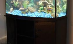 I have a 46 gallon fish tank with stand for sale. There are 4 silver tipsharks, 3 algue eaters and all the decorations includet. The fish tank is only a couple of months old. Must go!!