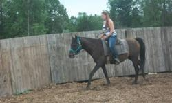 One Arab gelding and he is about 9 yrs old, Shes a Morgan and is about 5 yrs old. Both are green broke.  Call 613-331-2967  New Price...... $1100.00 for both.