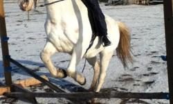 ARE YOU LOOKING FOR A..........Rodeo,Gymkhanna, Pony Club, Trail horse for UNDER $1500 WELL... my horse secret is all these things and MUCH more.Secret is in her 20's, Eygptain Arab. She will do anything you lead her to.BUT she does need an experianced
