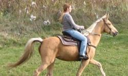 14 Safe Trail Horses to choose from!!  Tennessee Walking Horses, Spotted Saddle Horses, Arab, Paso Finos & Quarter Horse!  Great for all types of riders from intermediate to timid riders, beginner riders & children.     We have many horse colours right