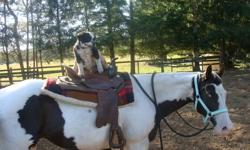 I am offering my paint mare for full or half lease... She is broke to ride and really broke, she knows her leg cues rides English or Western and I ride her on the trails.. She stands about 14'2 hh,,, Trailers, clips and bathes.. One of the best horses