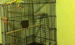 baby male and 2 yr old female for sale with 2 cages toys food and accessories both are handtame would love to keep them but sadly dont have enought time to devote to them please call 705 4789885 only big cage shown other is small travel cage This ad was