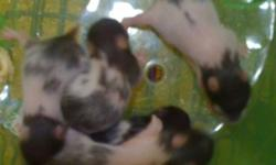 We have 5 baby hamsters for sale born October 7th 2011 , they are $5 each. They are NOT READY To go to their homes yet, will be able to by middle of November. Here are some pictures of the babies sorry they are the only ones we have but you are more than