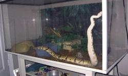 Normal morph ball bython 4 years old  I also have a 10 gallon fish aquarium with cover I will include.   Snake is well maintained and fed regularly.  Includes all of the following:  -Terarrium with cover -Heat lamp w/ infra-red bulb -2 Heating pads -2