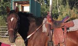 Rabbit is a 16.1 HH bay Thoroughbred gelding. He is well started on barrels and poles. Rabbit ran in a few jackpots over the summer and is already running top 2D times. He is very willing to work and loves having a job; he is also very versatile and