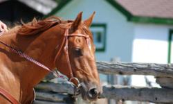 """Very athletic 8 year old unregistered quarter horse mare. """"Diamond"""" is very willing to please, has lots of speed and needs an experienced rider. Has been trained on barrels. Selling due to lack of riding time. Asking $2,000.00 or best offer. Please leave"""