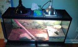 I have a beardie and tank for sale. Included lizzard lights tank rocks and dirt. Not sure of the size of the tank but it is big. Lizzard is about 4 in a half years old. Everything that is included is worth a easy 600 dollars. Asking 350.00 obo