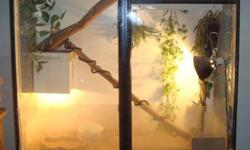 We have 2 adult Bearded Dragons and their enclosure for sale. The male is a regular and female is Sandfire. This pair is friendly and easy to handle. They come with their custom built enclosure with cabinet storage in bottom and all the gear. We are also