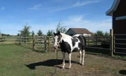 Oreo is friendly, easy to catch, load and stands for ferrier. Dental and shots are up to date.  Received 60 days of professional training.  Broke to drive and lots of trail riding experience as well as arena work.
