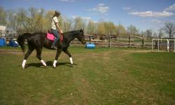 Aire is 6 year old registered TB mare (never raced). Sadly i am going to school and no longer have time for her.   About Aire: Hight - 16h Colour - Dark bay Training - w/t/c started over fences last summer and was doing about 2.5 feet with fillers. I had