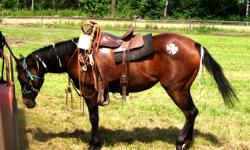 This pretty little mare has great potential. She is very calm and well tempered. With a little more work she would make the perfect kids horse. She can react to people taking sweaters or jackets off on her, but she has never bucked or done anything