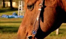 This is a very eyecatching headstall in excellent condition. Beautiful colour blue stones and silver accents on this one ear headstall. The headstall, snaffle bit, chin strap and reins are $70.00. The headstall alone is 50.00.