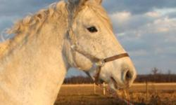 6 yr old 16h+/- Percheron Cross mare Backed w/t Would make a lovely project or broodmare. Healthy, Sound, No vices, UTD This ad was posted with the Kijiji Classifieds app.