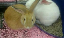 WE HAVE A VARIETY OF LOVELY, FRIENDLY & FLUFFY BUNNIES, LOOKING FOR A LOVING HOME. THEY ARE FREE WITH PURCHASE OF CAGE.  PLEASE CALL FOR DETAILS AT 519-652-7001 OR COME SEE THEM AT PET-OLOGY LONDON AT 7-2295 WHARNCLIFFE RD S IN THE LAMBETH FOODLAND PLAZA!