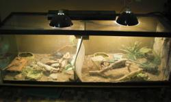 Here is a 180 gallon (2' x 2' x 6') tank for sale.  This beautiful set up can be yours for only 400 bucks, OBO.  Comes with climbing logs and rocks, food and water dishes, top fitted screen, flouresent and heat lighting fixtures, custom wiring and light