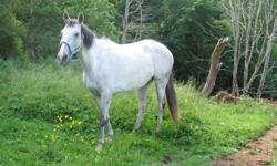 Lyra is a sweet mare and has been used for trails ..she will take any rider anytime ..she is sound and healthy ...she is a rescue so to an approved home only ..in her former life she was a polo pony ..she neck reins and moves of the leg very nice ..she