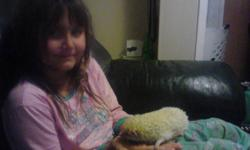 i am selling my 2 year old hedge hog because i am moving to Grenada and i cant bring her with us so i am sad to have to sell her so i am looking for a good home for her she is a great hedge hog. $100 OBO