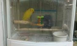 We have a beautiful 9 years old Indian Ringneck that comes with the cage plus food. Asking for $650   604-916-4545