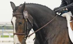 Beginner Riding Lesson Package   * Beginner riding lesson package * Six weeks for 150.00 * Experiences school horses available * Lessons taught in heated indoor arena * http://www.pelmacstables.com