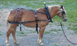 Offering for sale ....10/11 yr old mare 15hh .Lovely to look at sweet, kind  easy keeper. UTD on all care, good for ferrier, vet., traliers well ,stands to clip , groom , harness/tack. This mare is a fast learner theres no argument in her she just does,