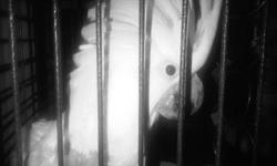 umbrella cockatoo for sale is male banded and 5 years old, bit plucked on chest from previous owner that had to experience with big birds, hasn't plucked since i got him about 3 weeks ago. I would love to keep him but the family is complaining that he is