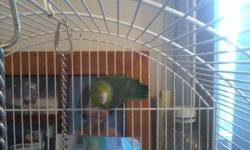 Well our landlord wants them gone, we have been holding him off. However we can not do that any longer. W have a  Bourkes parakeet (she  is not hand tame). And a female parroltette. The Bourkes  Willow  is a 5 year old female, . Gizmo is the parrotlette