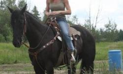 BYLA BETAPLAYBOY Reg# 4838245   5  year old Beautiful Black Reg Quarter Horse Mare 16 hands. VERY BLACK. This mare is very well broke, kind, quiet, loves people and always wants to please she would make anyone a nice horse.   Started on Barrels won the 3D