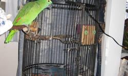Hello I am a Blue Fronted Amazon Parrot, and my name is Joey. My current owner saved me  but is unable to keep me. I will be 20 in February 2012 and I live for up to 85 years. I need a home where someone is there most of the time and loves to chat back
