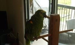 His name is Iago and he is approximatley 15 years old. He was rescued back then and now he needs someone to rescue him again as we can no longer look after him.   He comes with a cage, a large perch, and a smaller perch.    If you have any questions about