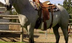 15-1, 4 yr old blue roan mare. Very well mannered and well started. Great with feet, loading etc. Very ell built, Great bloodlines and can easily be turned into a great kids horse with time. $3200 obo.
