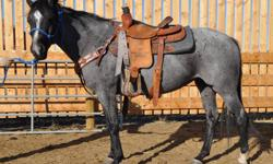 QH Mare 'Blue Belle'   2005 Blue Roan Mare.  Belle is a True Blue Roan with a stripe and Sock. Belle is a nice Young mare with a Solid Mind.  Being rode by a Teenage Girl.   She rides Nicely,  good start on neck reining.   Very Calm under saddle and She